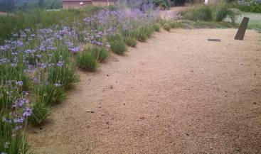 SAULO PARC - jardí mediterrani amb sauló
